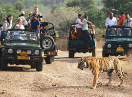 Wildlife Sanctuaries of India