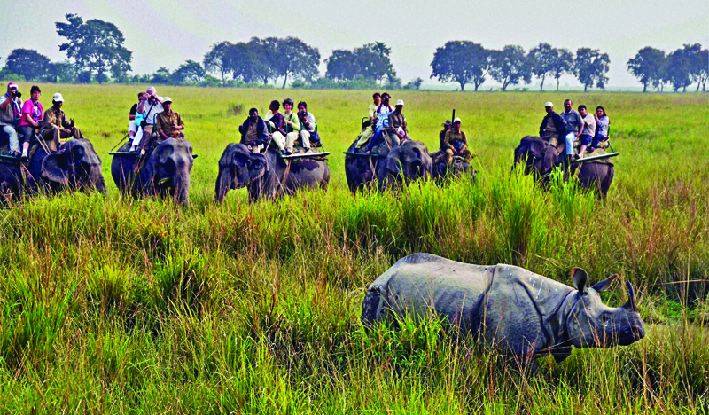 Tourists at Kaziranga National Park