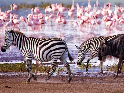 The Serengeti National Park and the Ngorongoro Crater in Tanzania