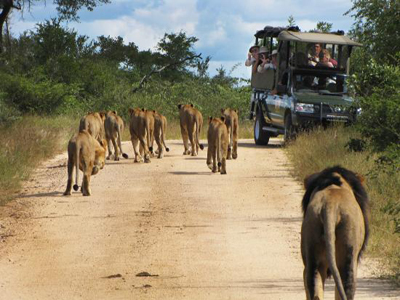 luxury safari in Africa