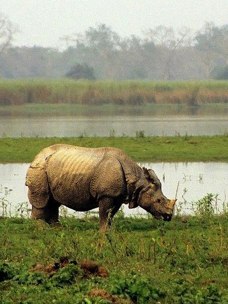 Kaziranga National Park (1985)