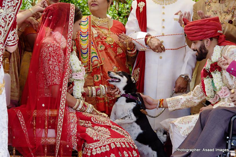 Indian Bride and Groom Enjoying Wedding Movement