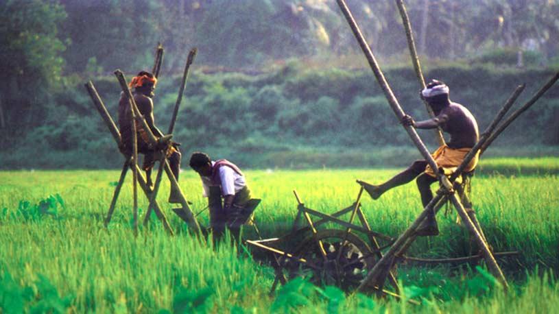 Rice fields of Kuttanad